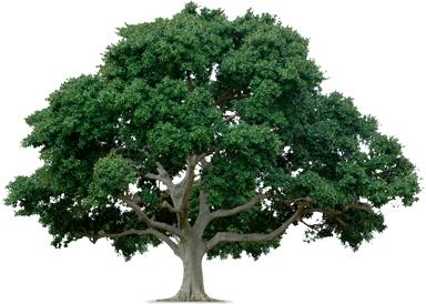 advocacy tree